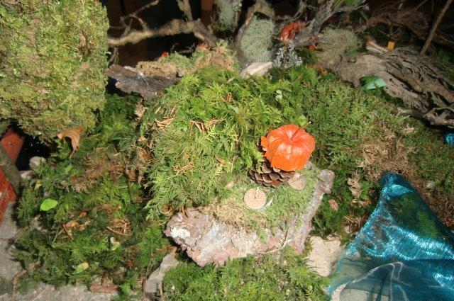 Multitalent Wald (62)